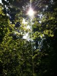 A Light in the Forest by JW89