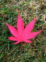 Canadian Weed by muffla