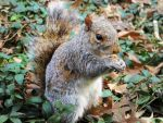 Central Park's Squirrel by PBorras
