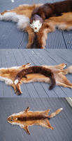 Taxidermy - Skull mink by The-F0X