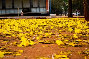 Yellow Street by imhsps