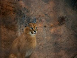 Caracal Lynx by Fictionary