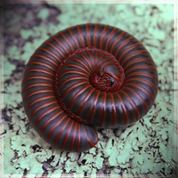 Millipede Dreams. by Zaellrin