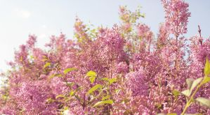 Pink Spring by LinnmicPhoto