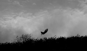 The Flight by LouisTN