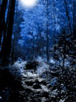 'MOONLIT FOREST' by JLYNDYDESIGNS