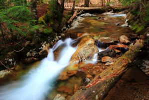 Logs in the Stream by Celem