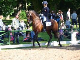 Spanish Iberian Dressage Horse Trot Collected by LuDa-Stock
