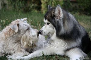 Cherished Moments by Bafa