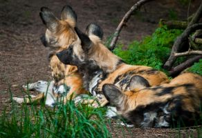 Three Dog Nap 2 by Mad-Willy