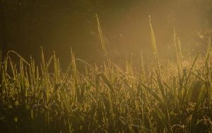 Morning grass by PatrikEffect