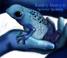 Poison dart frog detail by S0WIL0