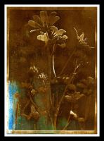 Bygone Flowers by Ocular-Atrophy