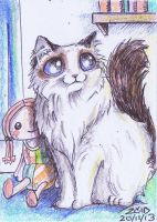 ACEO Ragdoll funny cat breeds by KingZoidLord