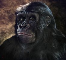 Gorilla Female by perana