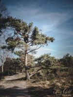Heide I by staygold-photo