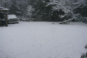 December Snow 2008 16 by Ozzyhelter