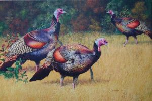 Turkey Trio by AinsleyM