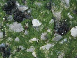 seaweed and rocks by CodedNotion