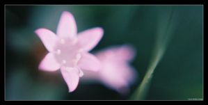 tiny, tiny beauty by Menge