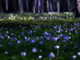 spring forest by Iridescent-happinesS