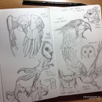 Creatuanary 01 Birds Of Prey Studies by rafater