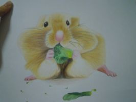 A hamster is eating vegetable by angelklein
