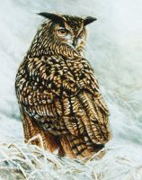 Eurasian Eagle-owl by Wildkunst