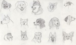 Dog Breeds Sketches by Snow-Moon