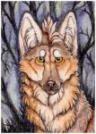 ACEO: Tanateros by SaQe