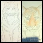 Tiger sketch and initial paint by CaptainBeth