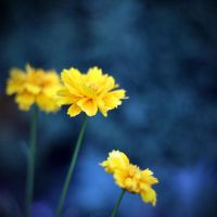 yellow by BlueFish24