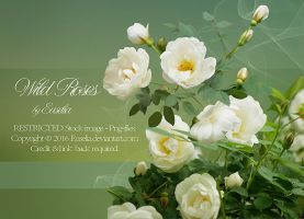 WildRoses - png-files by Euselia