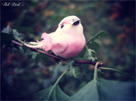 Pink Bird Sitting On A Branch ... by Tumbling-Star