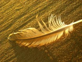Feather by sayhellowavegoodbye