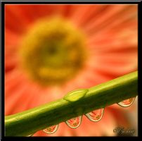 Water Drop Reflection by Amatuer-Pics-By-Me