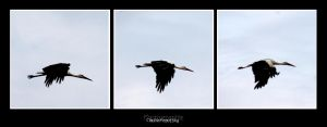 stork flying act by declaudi