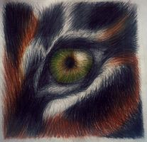 Eye of the tiger by TheRedHare1