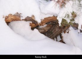Snow Pine- STOCK by Rainny-Stock