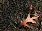 Leaf in the Sun 1 by arien87