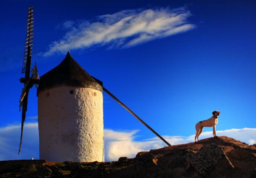Don Quijote by irosss