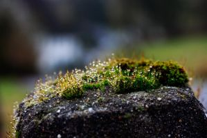 look across this tiny moss by solo-talent