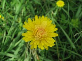 yellowness 5933 by Maxine190889