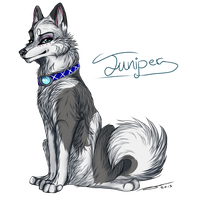 CM| Juniper Signature commission. by AgentWhiteHawk