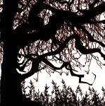 Tree in Salem by Nathicana