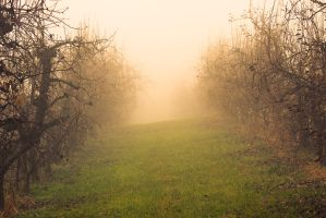 apple-trees by tobiasth