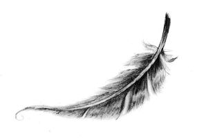 Feather by Pipenagos