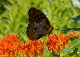 Monarch Butterfly by ZexionLover411