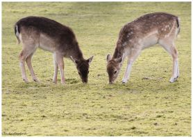 2 Bambi friends by Claudia008