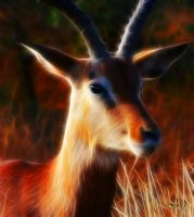 Impala by Lashington